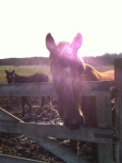 moms horses